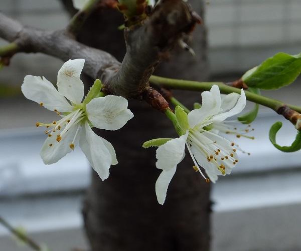 flower-prune